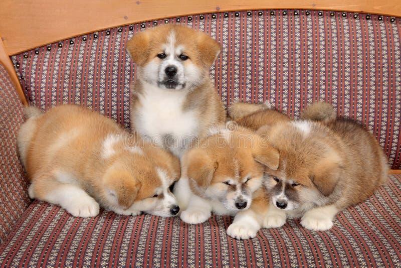 Młodzi zwierzęta domowe zdjęcia royalty free