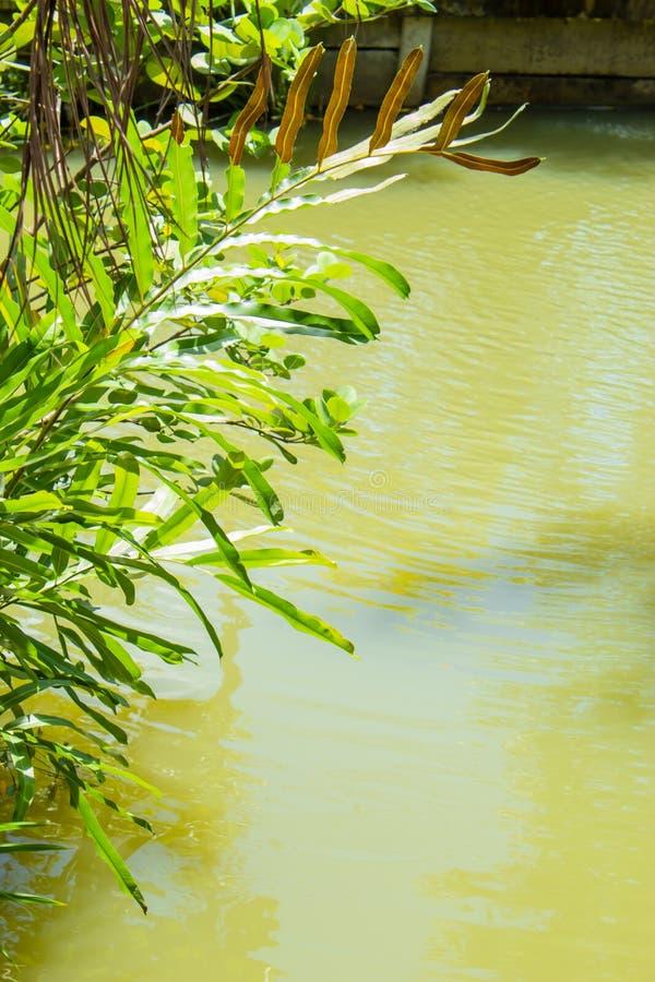 Młynówka w sadzie obrazy stock