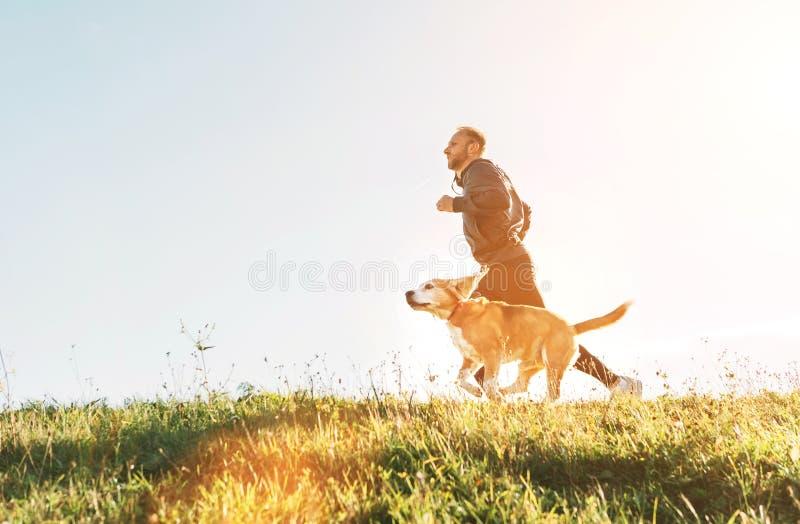 M??czyzna biega z jego beagle psem Ranku Canicross ?wiczenie zdjęcia royalty free