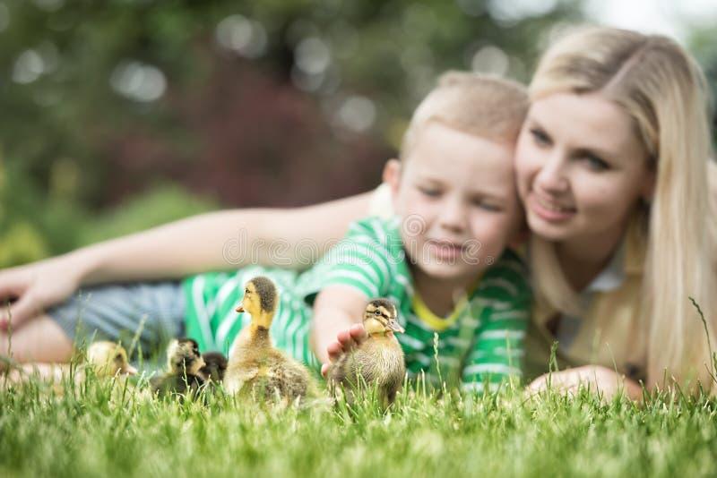 M?e e filho que encontram-se na grama e que olham como uma caminhada pequena do pato fotografia de stock