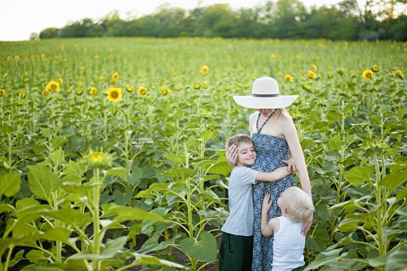 M?e gr?vida feliz que abra?a dois poucos filhos em um campo de girass?is de floresc?ncia fotos de stock