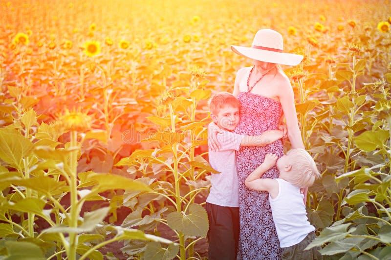 M?e gr?vida feliz que abra?a dois poucos filhos no campo ensolarado de girass?is de floresc?ncia imagens de stock