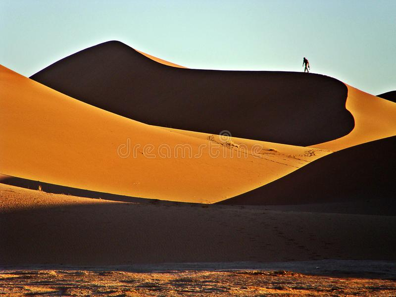 Dunes in the moroccan sahara desert. M`Hamid is a town that is in the Zagora region, in the center of Morocco, and is recognized as one of the places where the stock photos