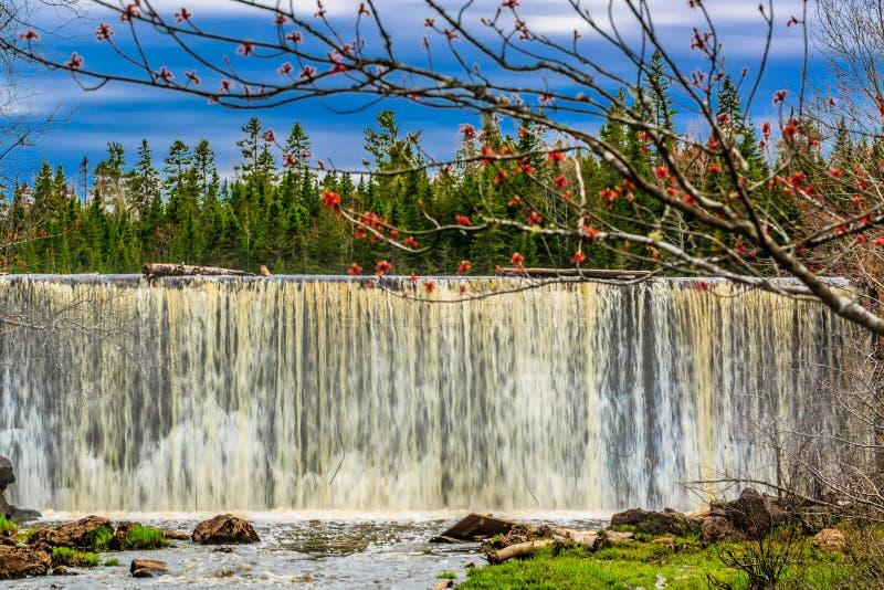 M?hlnebenfluss-Nationalpark, gr??eres Moncton, New-Brunswick, Kanada lizenzfreies stockfoto