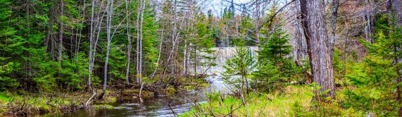 M?hlnebenfluss-Natur-Park, Fr?hlingsfarben in gr??erem Moncton, New-Brunswick, Kanada lizenzfreie stockfotografie