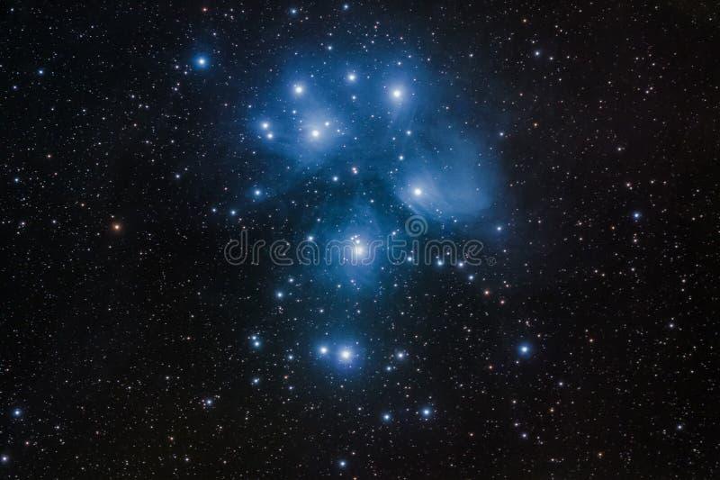 M45 - Mazzo di Pleiades in Toro immagini stock libere da diritti