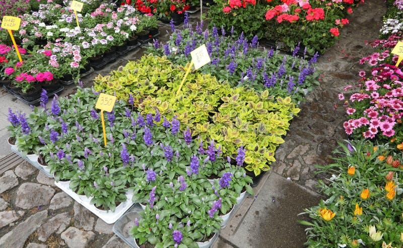 m?nga blommor i krukor som ?r till salu p? marknaden royaltyfria foton