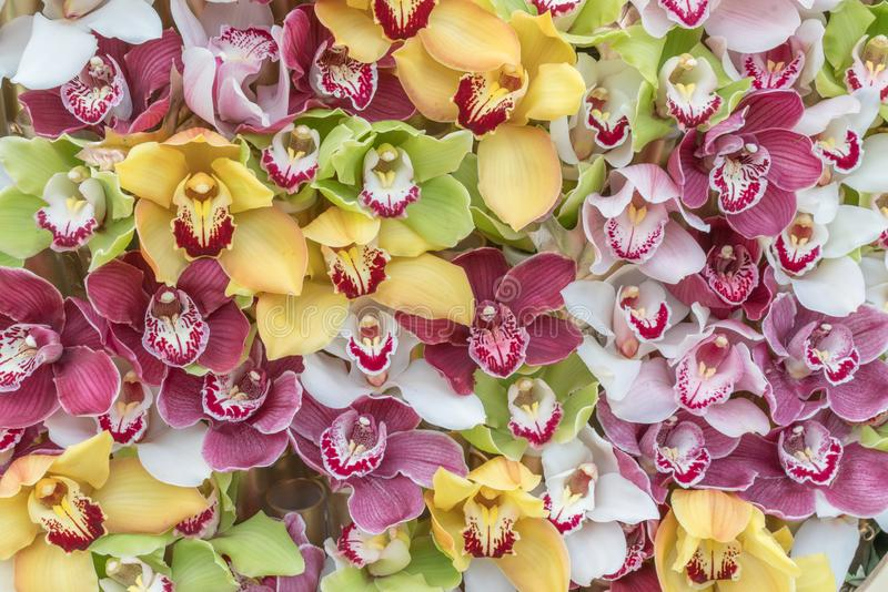 M?ngf?rgade orkid?r som ordnas p? bakgrunder arkivbild