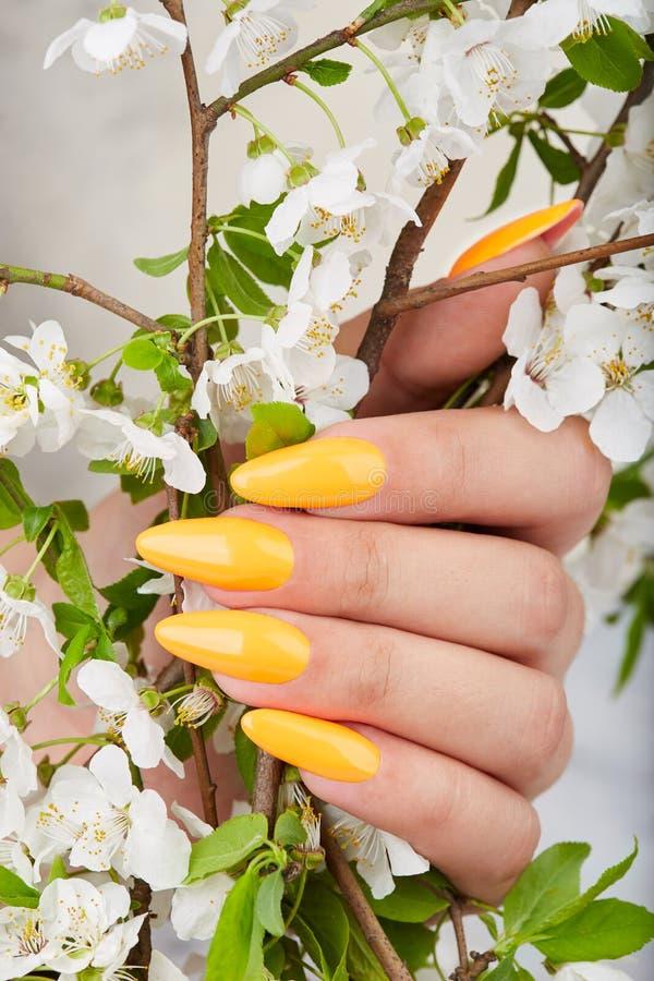 M?o com os pregos manicured artificiais longos coloridos com verniz para as unhas amarelo fotografia de stock royalty free