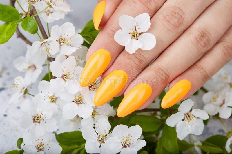M?o com os pregos manicured artificiais longos coloridos com verniz para as unhas amarelo imagens de stock royalty free