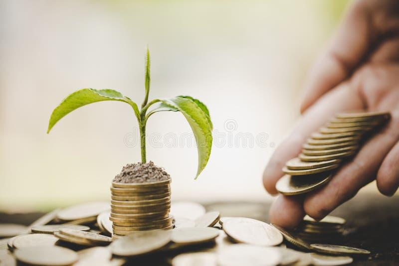 M?o que d? uma moeda a uma ?rvore que cresce da pilha das moedas Contabilidade financeira, conceito do investimento imagens de stock