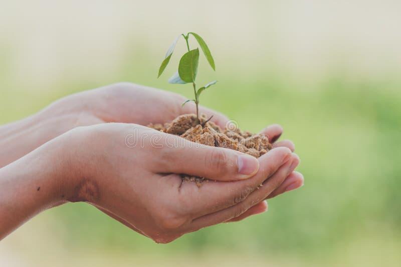 m?o que guarda a ?rvore pequena para plantar Dia da Terra do mundo do verde do conceito fotografia de stock royalty free