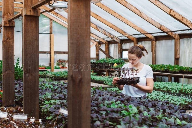 M?oda kobieta agronom sprawdza ro?liny w szklarni obraz stock
