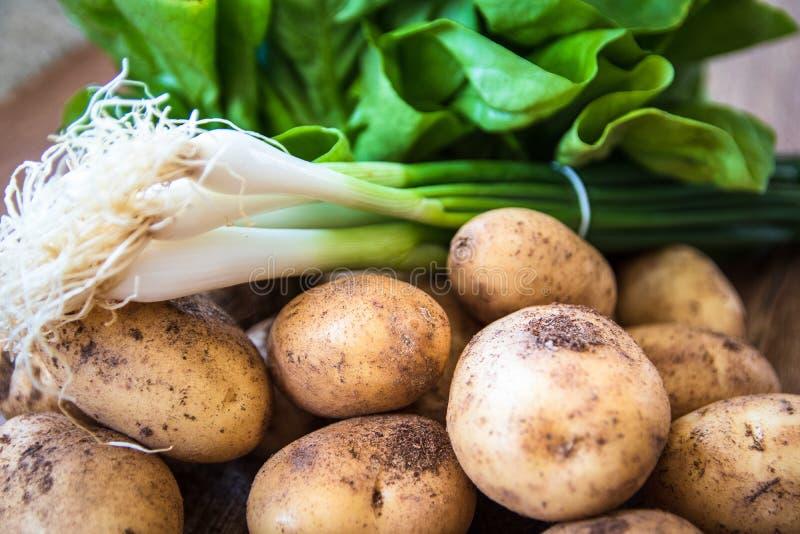 M?oda surowa uncooked organicznie grula, sa?ata i potomstwa cebulkowi, zdjęcia stock