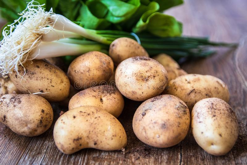 M?oda surowa uncooked organicznie grula, sa?ata i potomstwa cebulkowi, obraz stock