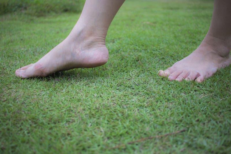 M?odej kobiety bosy odprowadzenie na ?wie?ej, zielonej trawie w pogodnym lecie w ranku, Restful moment Zdrowy Styl ?ycia Brigh zdjęcia stock