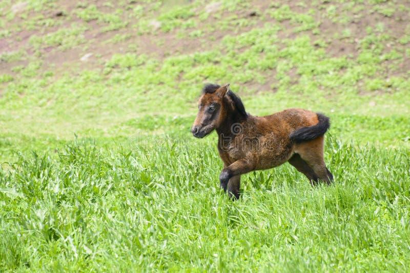 Download Młody Konik W Zielonym Polu Zdjęcie Stock - Obraz złożonej z zwierzęta, natura: 53787678