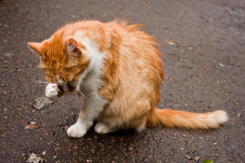 Młody Kot Zdjęcie Stock