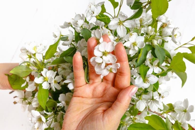 M?os f?meas da ternura com flores da mola Conceito da ternura, cuidados com a pele, as m?os das flores da mola da posse da menina imagem de stock