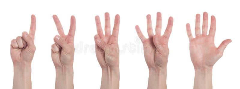 M?os masculinas que contam um a cinco isolados no fundo branco Grupo de imagens m?ltiplas collage imagens de stock