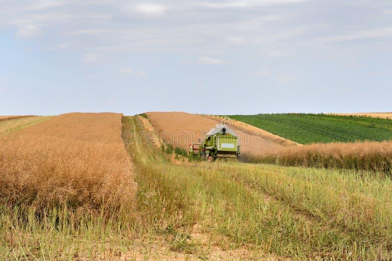 M?quina de la m?quina segador para cosechar el funcionamiento del campo de trigo imagenes de archivo