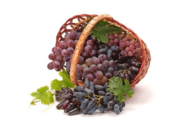 mûr rouge de raisins photos stock