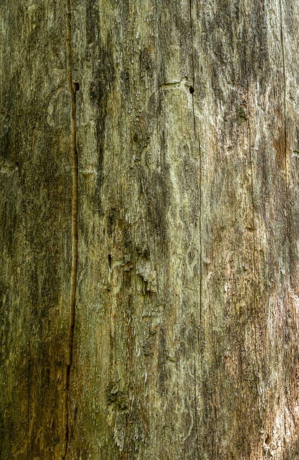 M?rk wood texturbakgrundsyttersida med den gamla naturliga modellen arkivfoto