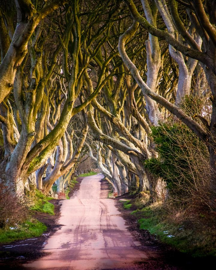 M?rkerh?ckarna i nordligt - Irland royaltyfri fotografi