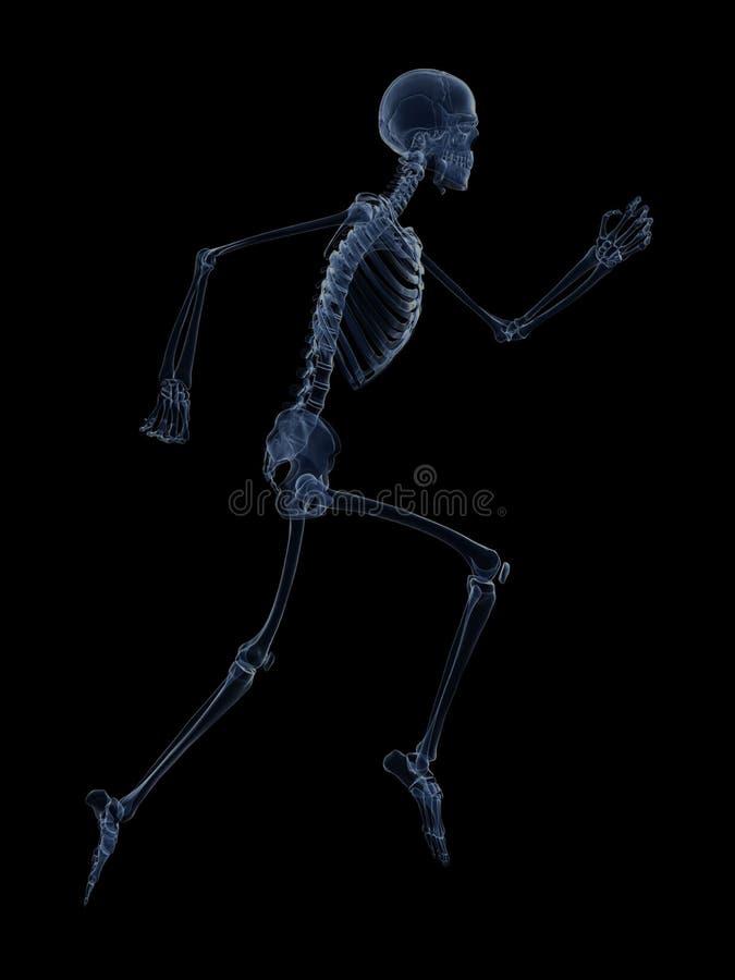 Download Męski biegacz ilustracji. Ilustracja złożonej z kolano - 28960859