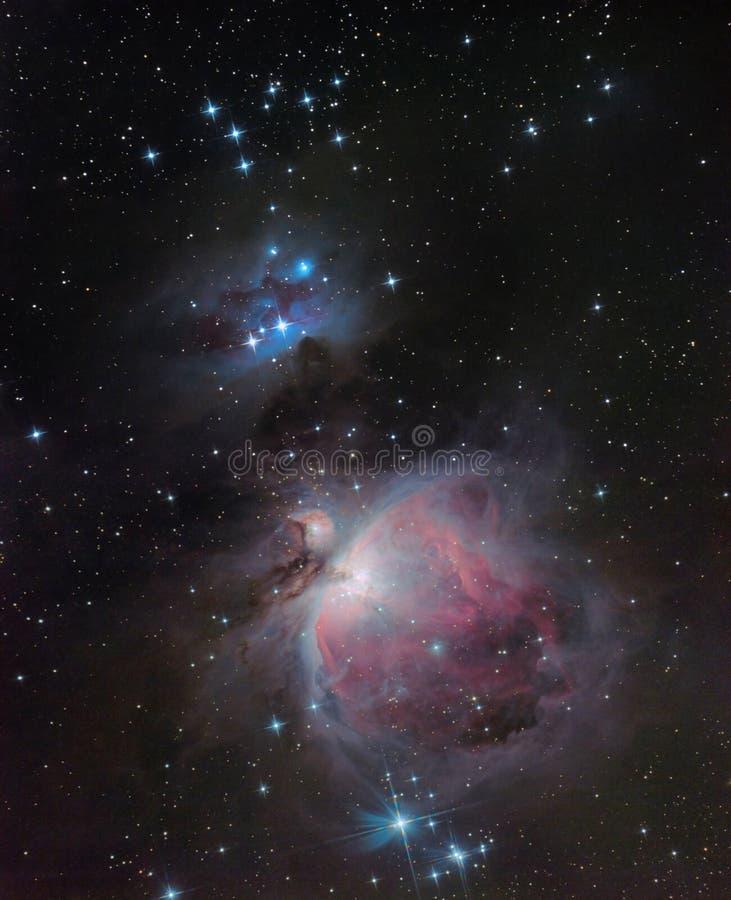m42 nebula orion royaltyfri fotografi