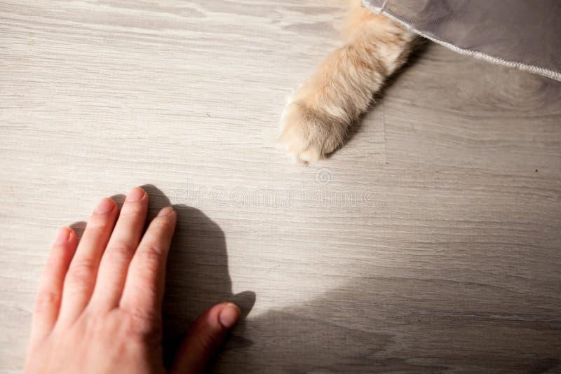 Mała biała kot łapa i ludzka ręka na podłodze zdjęcie royalty free