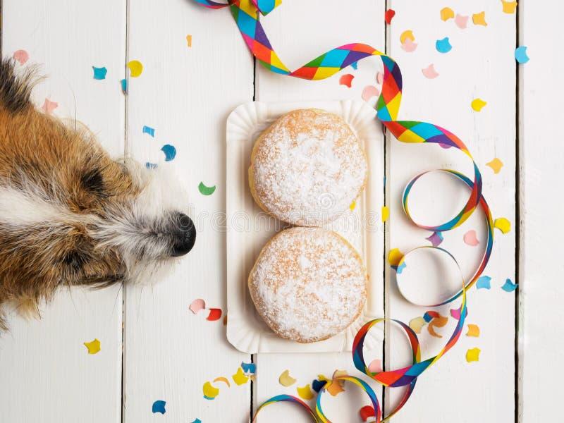 Małego psa i pączka donuts z karnawałową dekoracją na białym tle obrazy royalty free