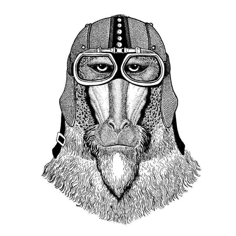 Małpa, pawian, małpa, małpa jest ubranym motocykl, aero hełm Rowerzysta ilustracja dla koszulki, plakaty, druki ilustracja wektor