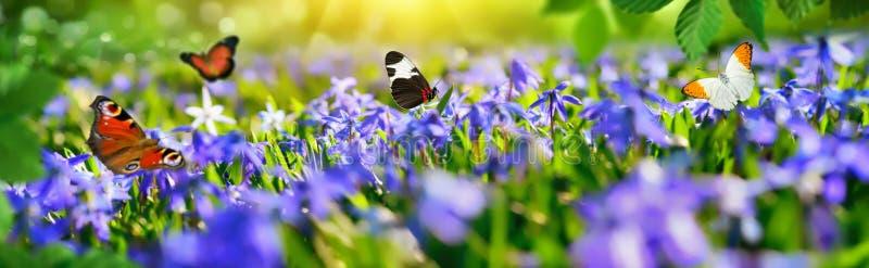 Mały raj z wiosna motylami i kwiatami fotografia stock