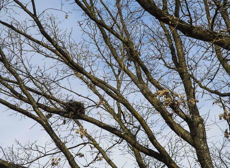 Mały rozmiar ptaka gniazdeczko na drzewie obrazy stock