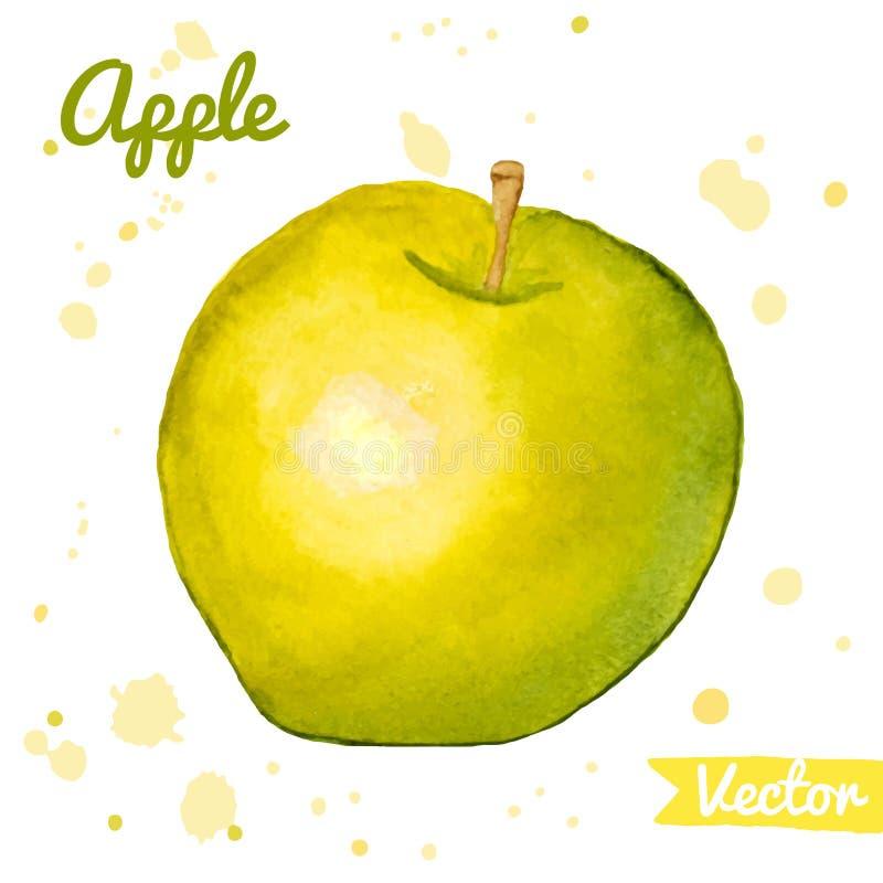 Maçã abstrata verde e amarela da aquarela ilustração do vetor