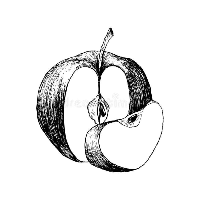 Maçã fresca Entregue a ilustração tirada do vetor do alimento do eco do estilo do esboço Desenho isolado no fundo branco ilustração stock