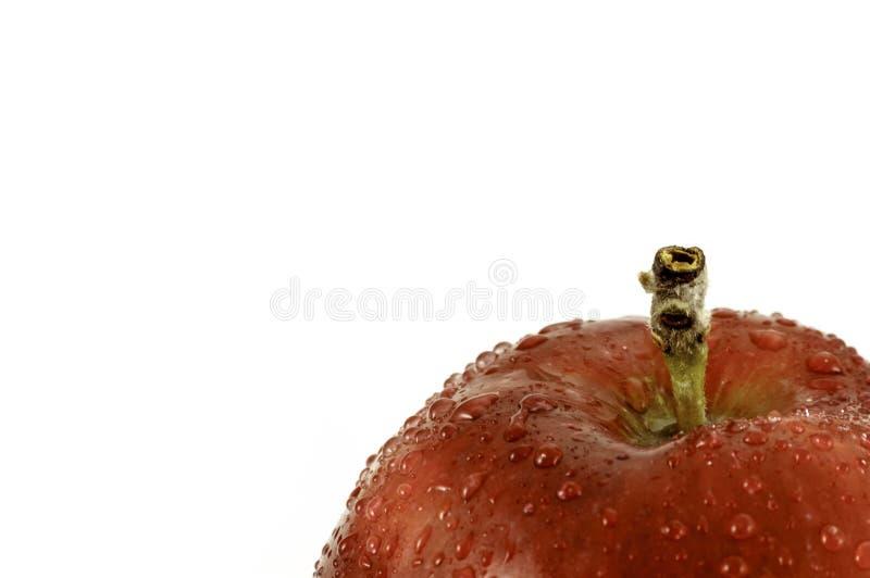 A maçã vermelha com gotas que de água o close-up disparou no branco com espaço da cópia text fot imagens de stock royalty free