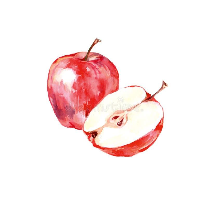 Maçã vermelha tirada mão da aquarela Ilustração natural isolada do fruto do alimento do eco no fundo branco Vetor ilustração do vetor