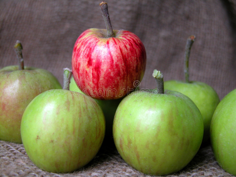 Download Maçãs foto de stock. Imagem de vermelho, frutas, joelho - 52524