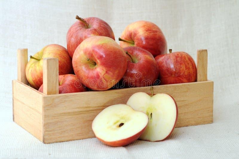 maçãs da gala foto de stock royalty free