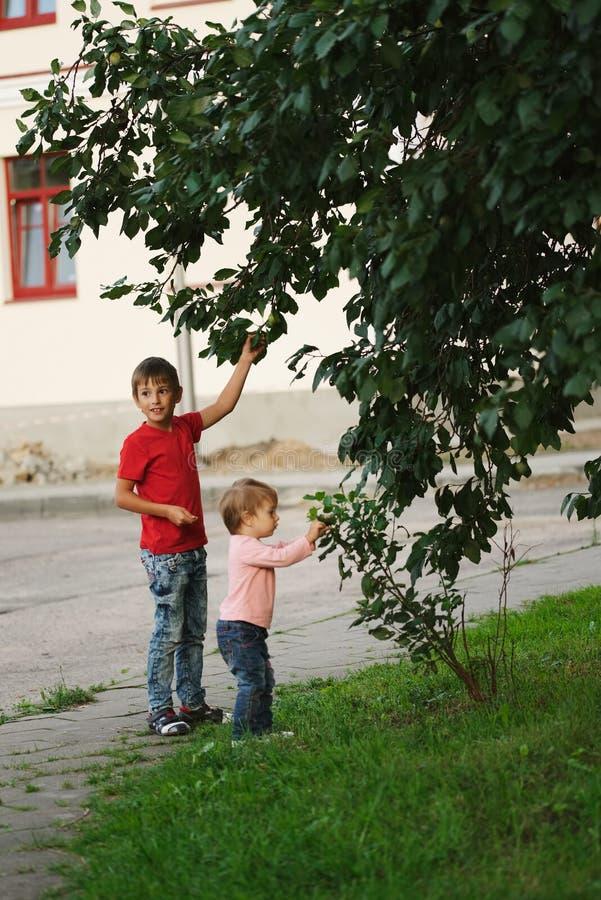 Maçãs da picareta do menino e da menina foto de stock