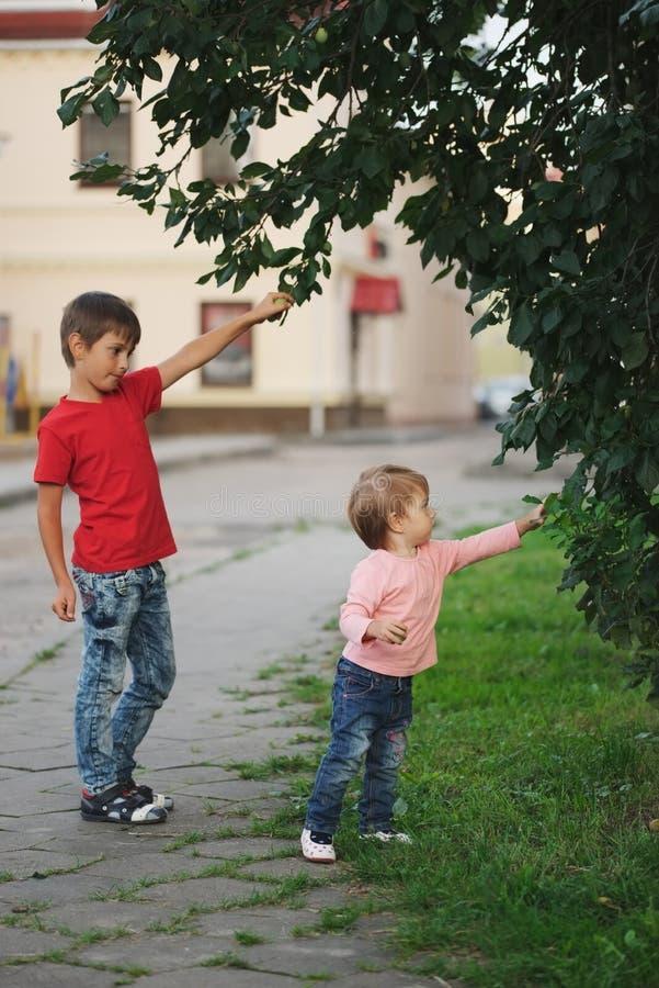 Maçãs da picareta do menino e da menina fotos de stock