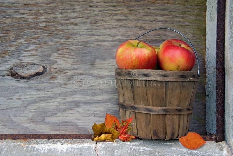 Maçãs do outono imagens de stock royalty free