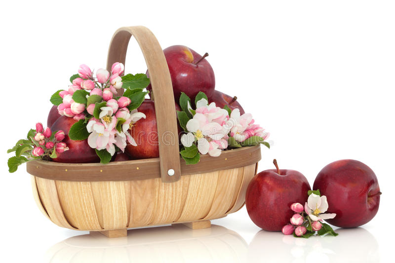 Maçãs e flor da flor fotografia de stock