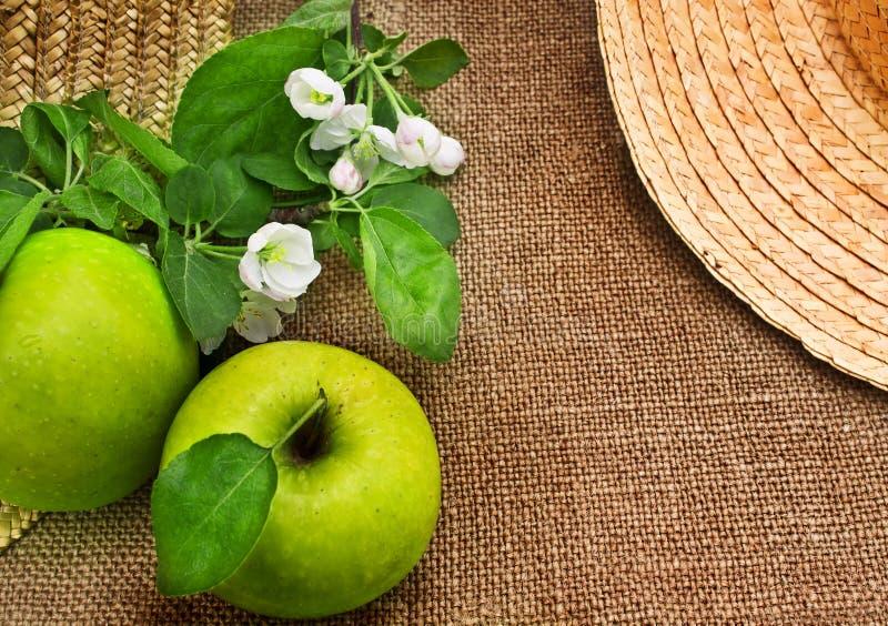 Maçãs e ramos verdes da flor da maçã imagem de stock