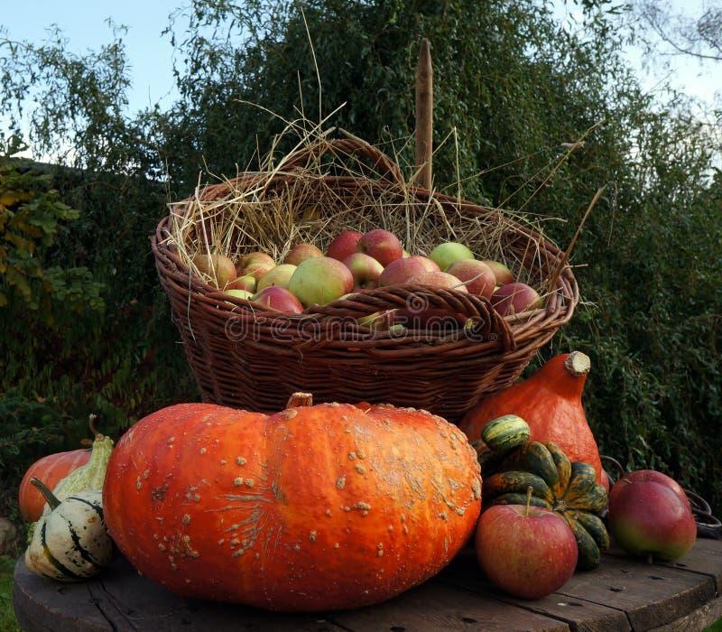 Maçãs em uma cesta de vime na palha, abóboras da decoração do outono, as vermelhas e as verdes, abóbora imagens de stock royalty free