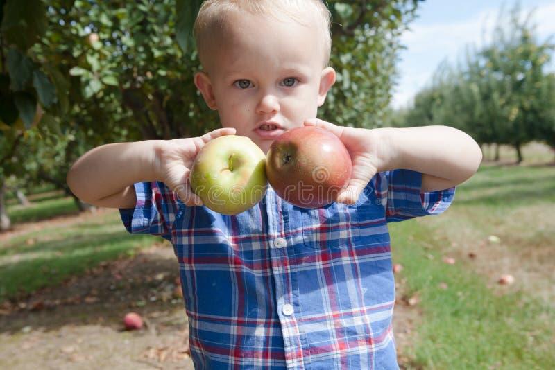 Maçãs felizes da colheita do menino imagens de stock