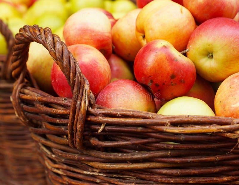 Maçãs maduras na cesta foto de stock royalty free