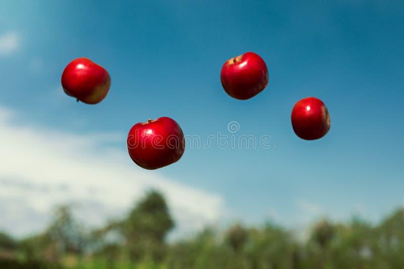 Maçãs maduras na gravidade zero jogadas no ar fotografia de stock